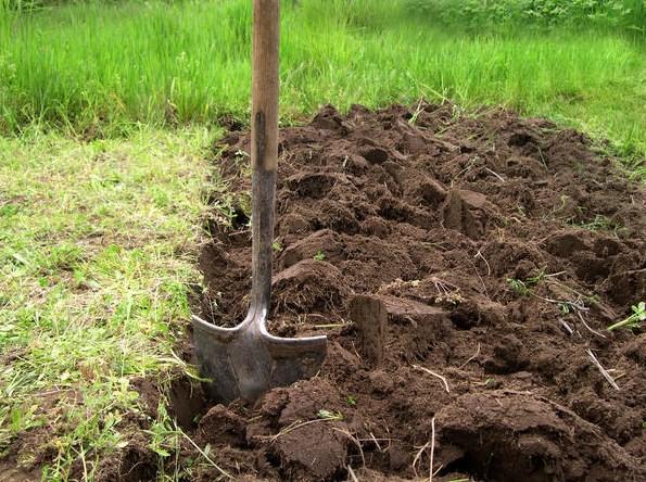 чем можно засадить огород для отдыха почвы
